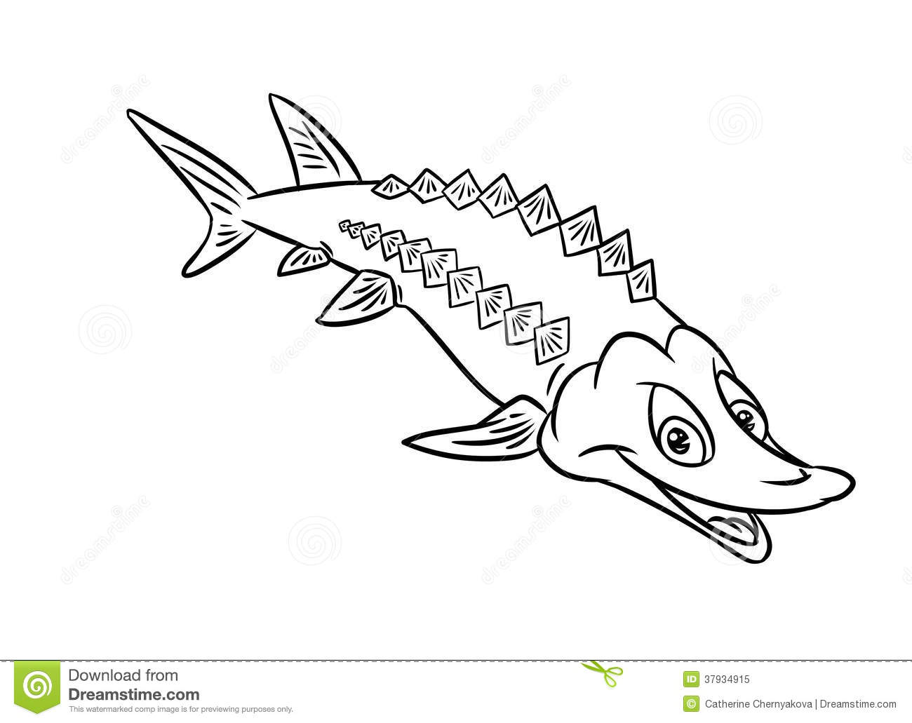 Sturgeon Fish Illustration Coloring Pages Royalty Free