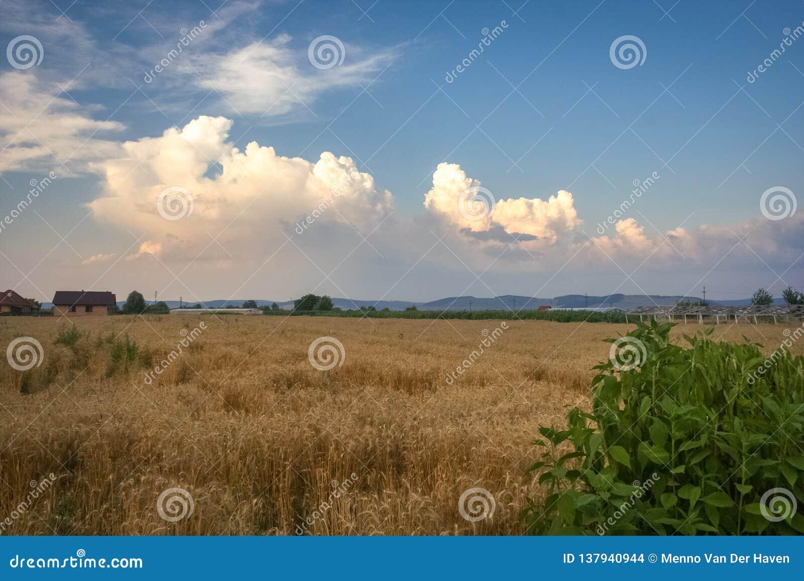 Sturmwolken sind über den Vorbergen der Karpatenberge in Siebenbürgen, Rumänien im Bau