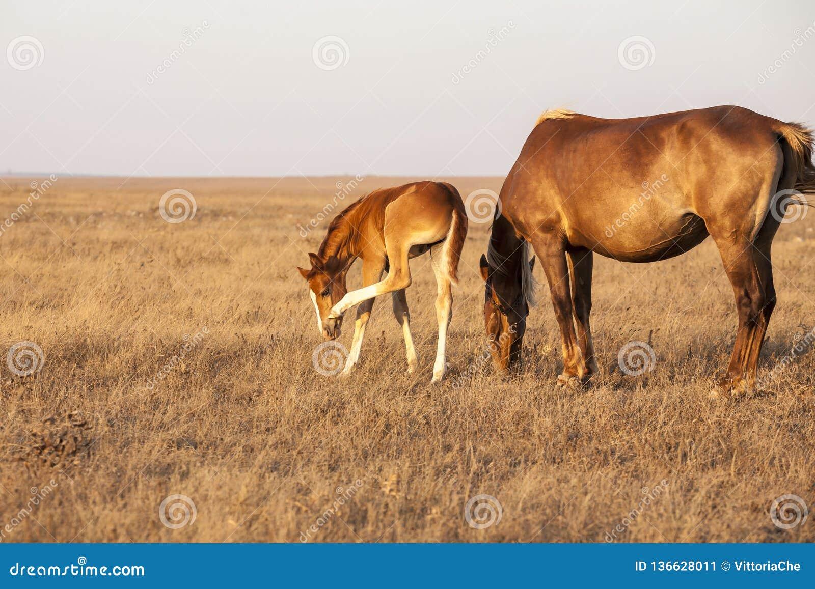 Stute mit nettem wenig Fohlen auf der Weide