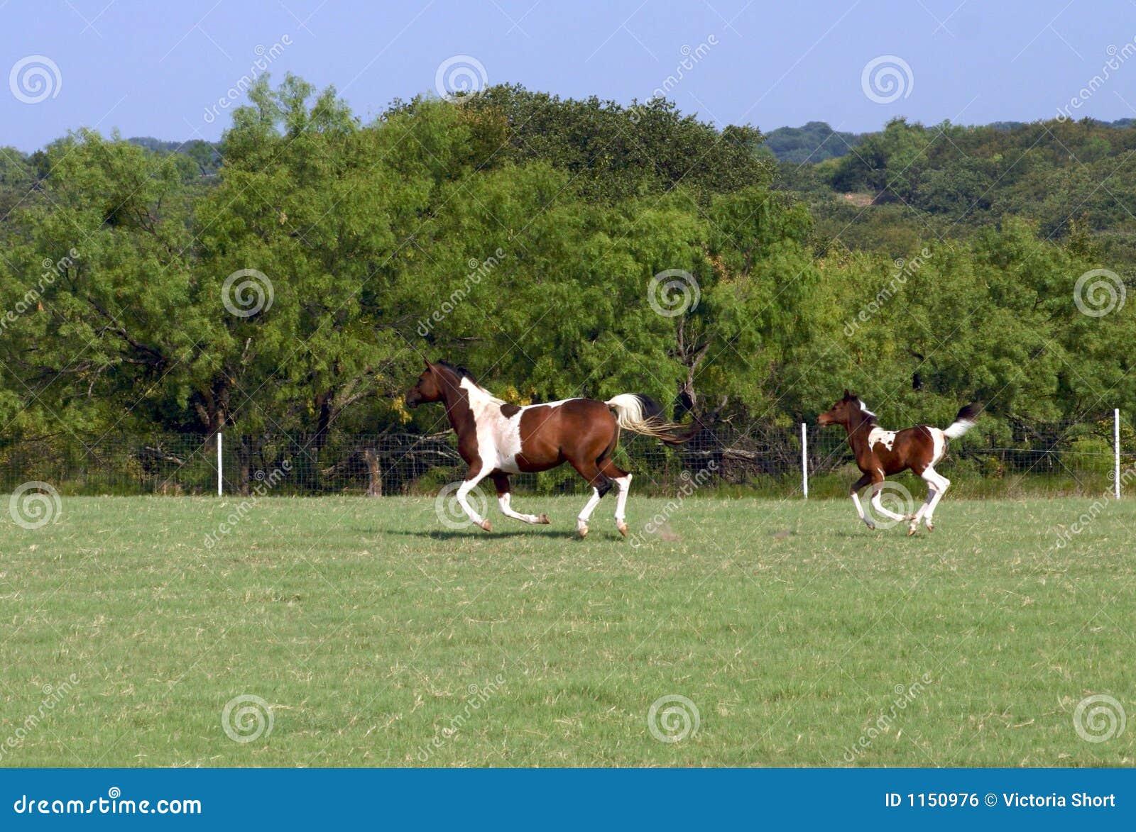 Stuten- und Fohlenbetrieb