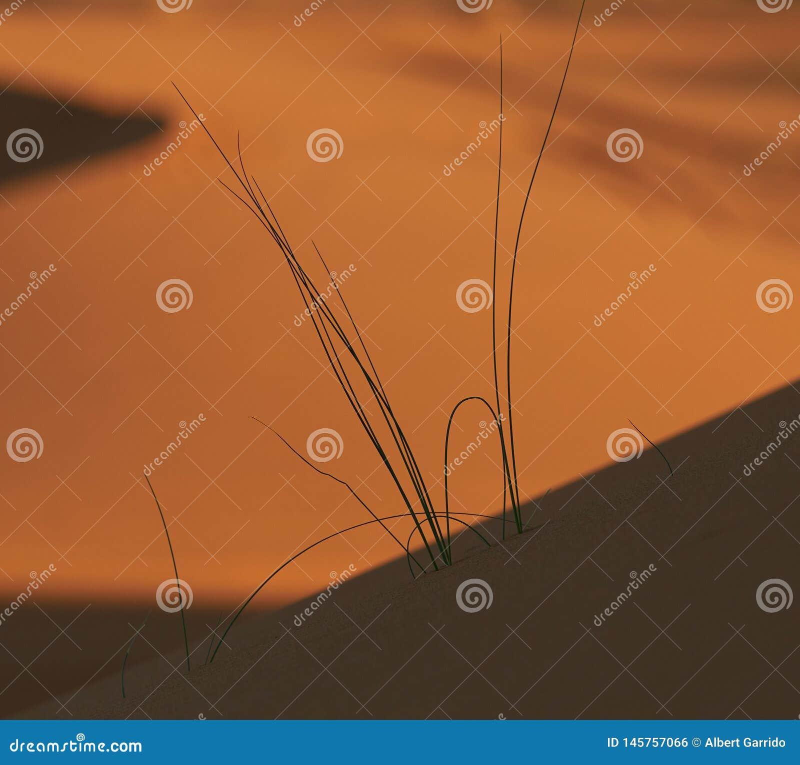 Stycke av liv som uthärdas bland ökensanden