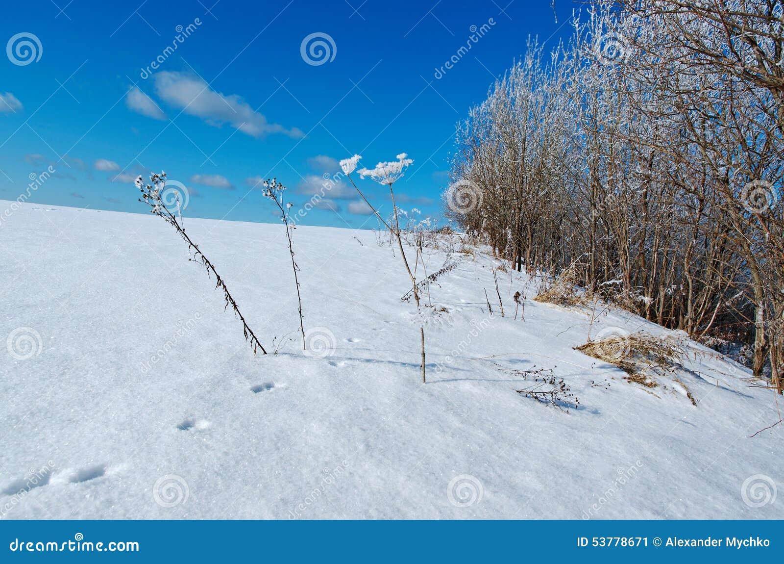 Styczeń 33c krajobrazu Rosji zima ural temperatury mrożone drzewa