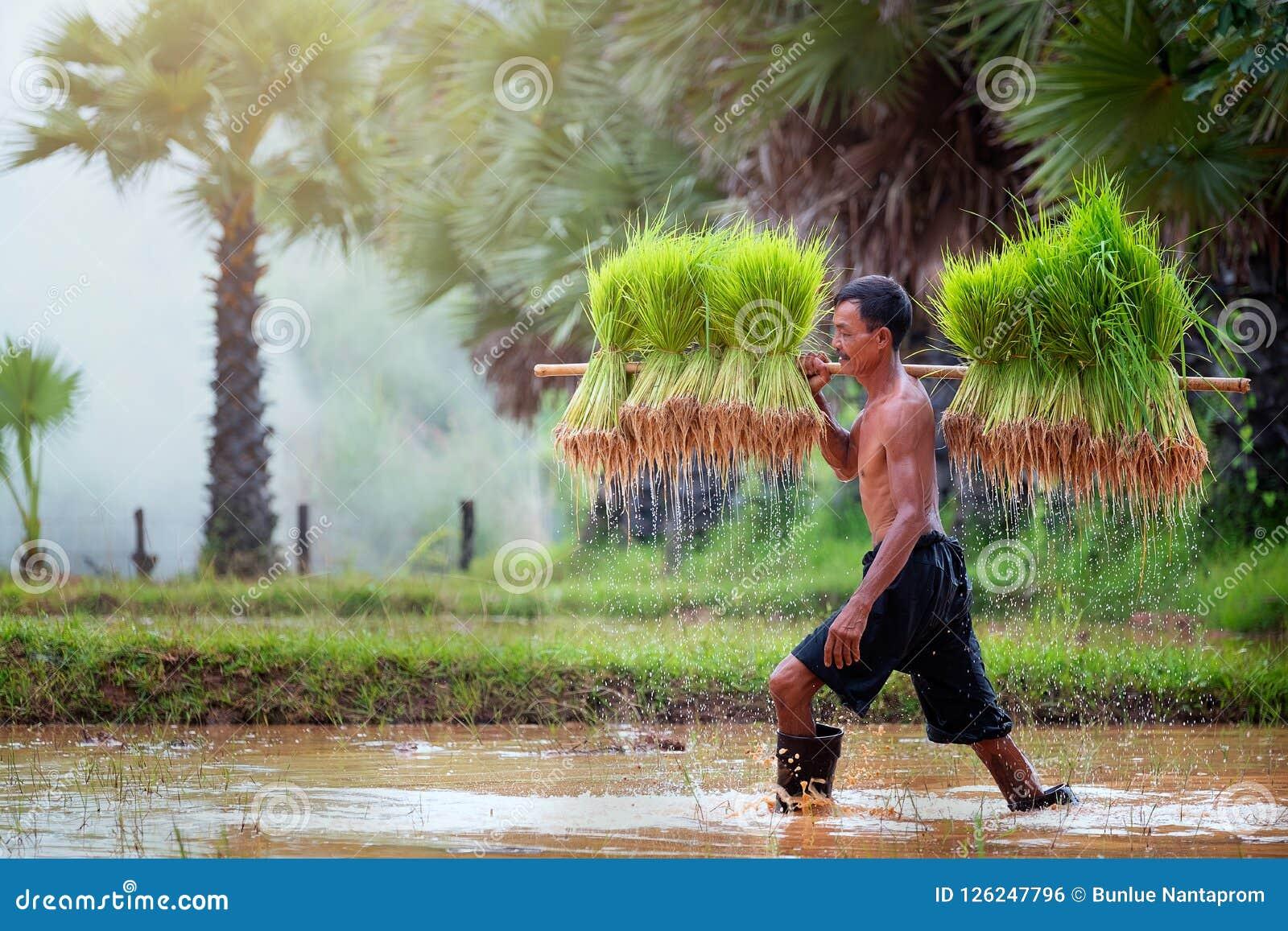 Styl życia Azji Południowo Wschodniej ludzie w śródpolnej wsi Tha