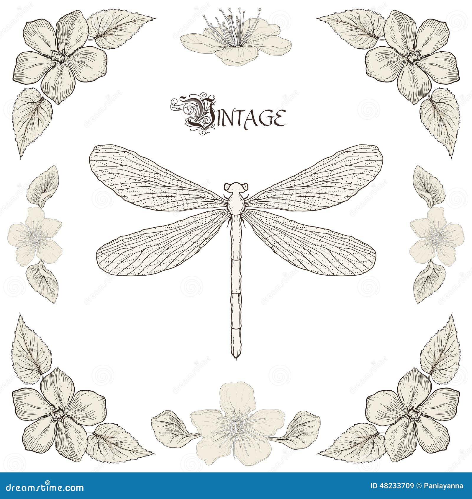 Style de gravure de vintage de dessin de libellule - Libellule dessin ...