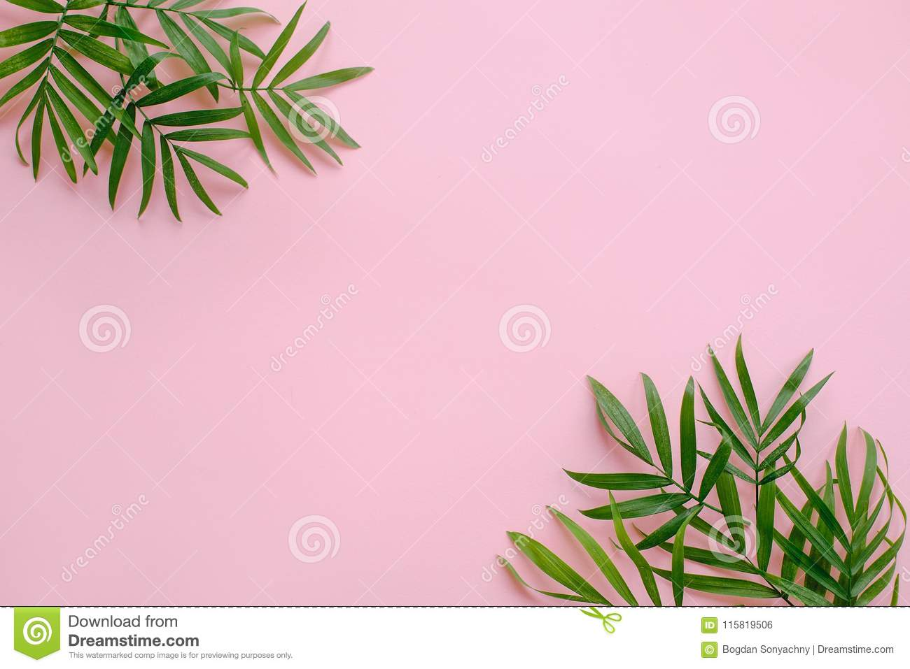 stylish summer flat lay. fresh palm leaves border on pink background with space for text. modern image. top view. summer vacation
