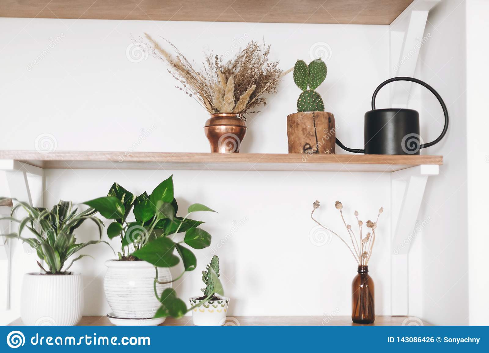Image of: Stylish Wooden Shelves With Green Plants Black Watering Can Boho Wildflowers Modern Hipster Room Decor Cactus Epipremnum Stock Photo Image Of Interior Gardening 143086426