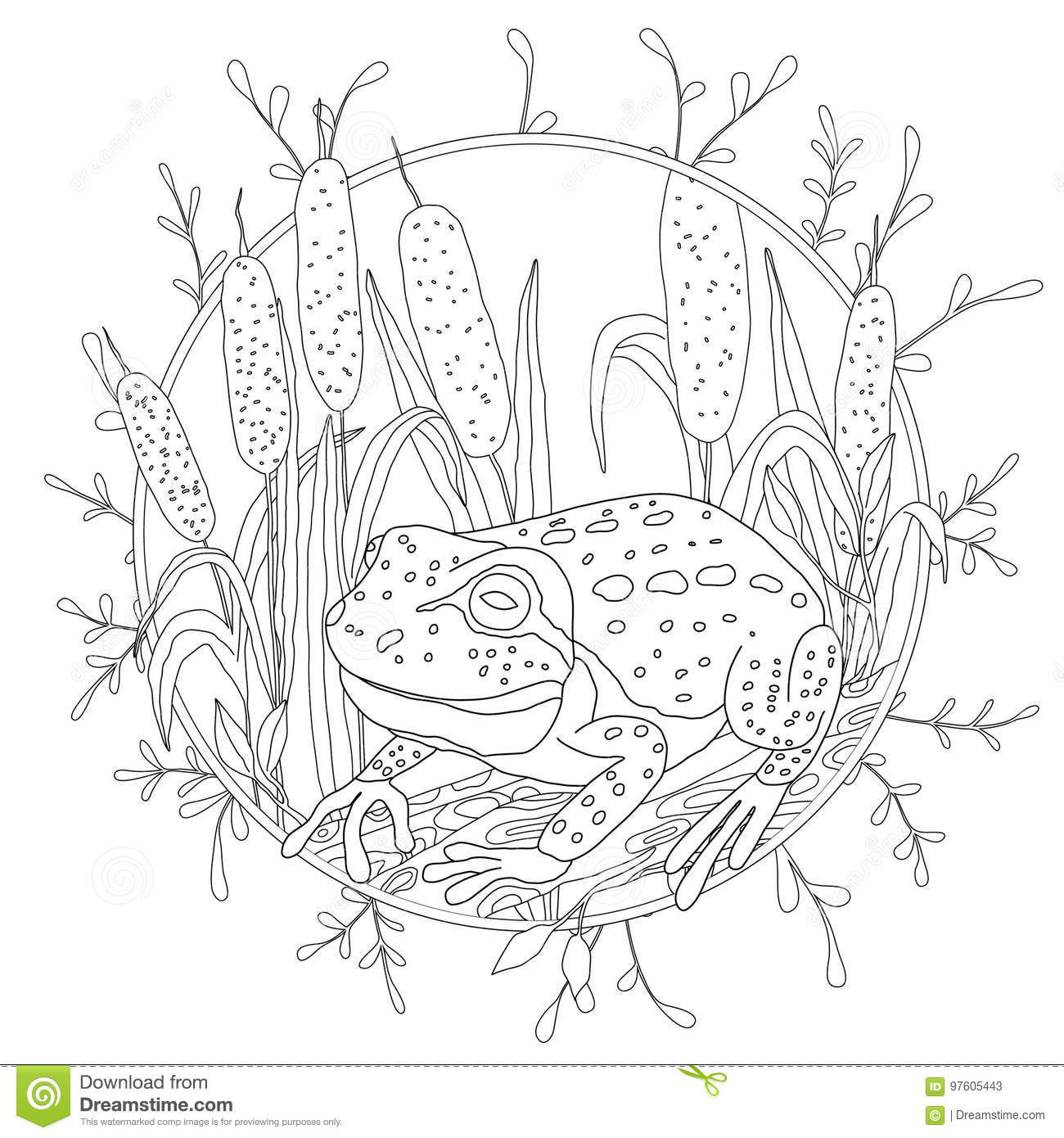 Download A Stylized Frog Sits Among The Reeds Sketch For Adult Anti Stress Coloring