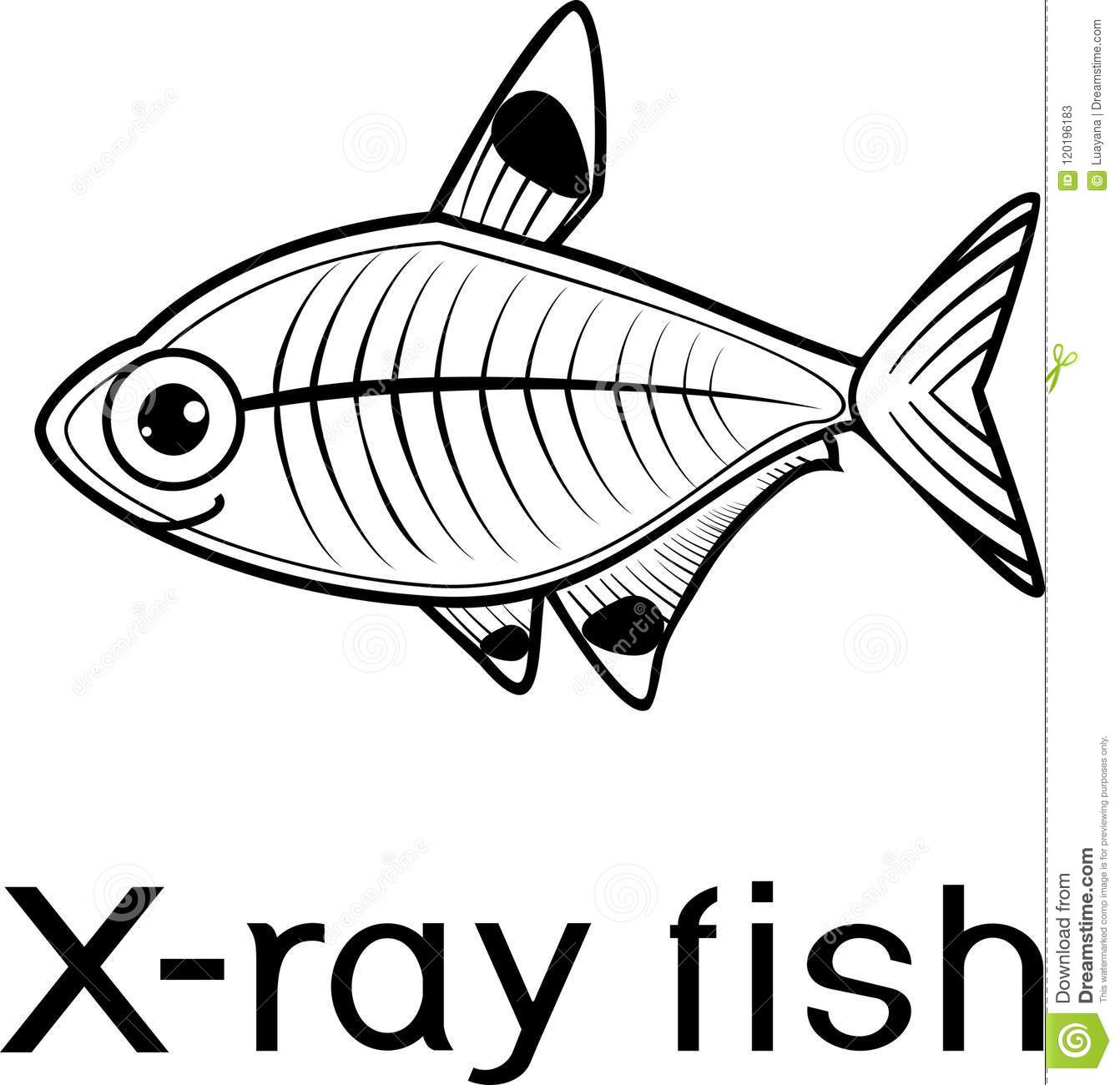 Stylized X Ray Fish Or Pristella Maxillaris Coloring Page With Title