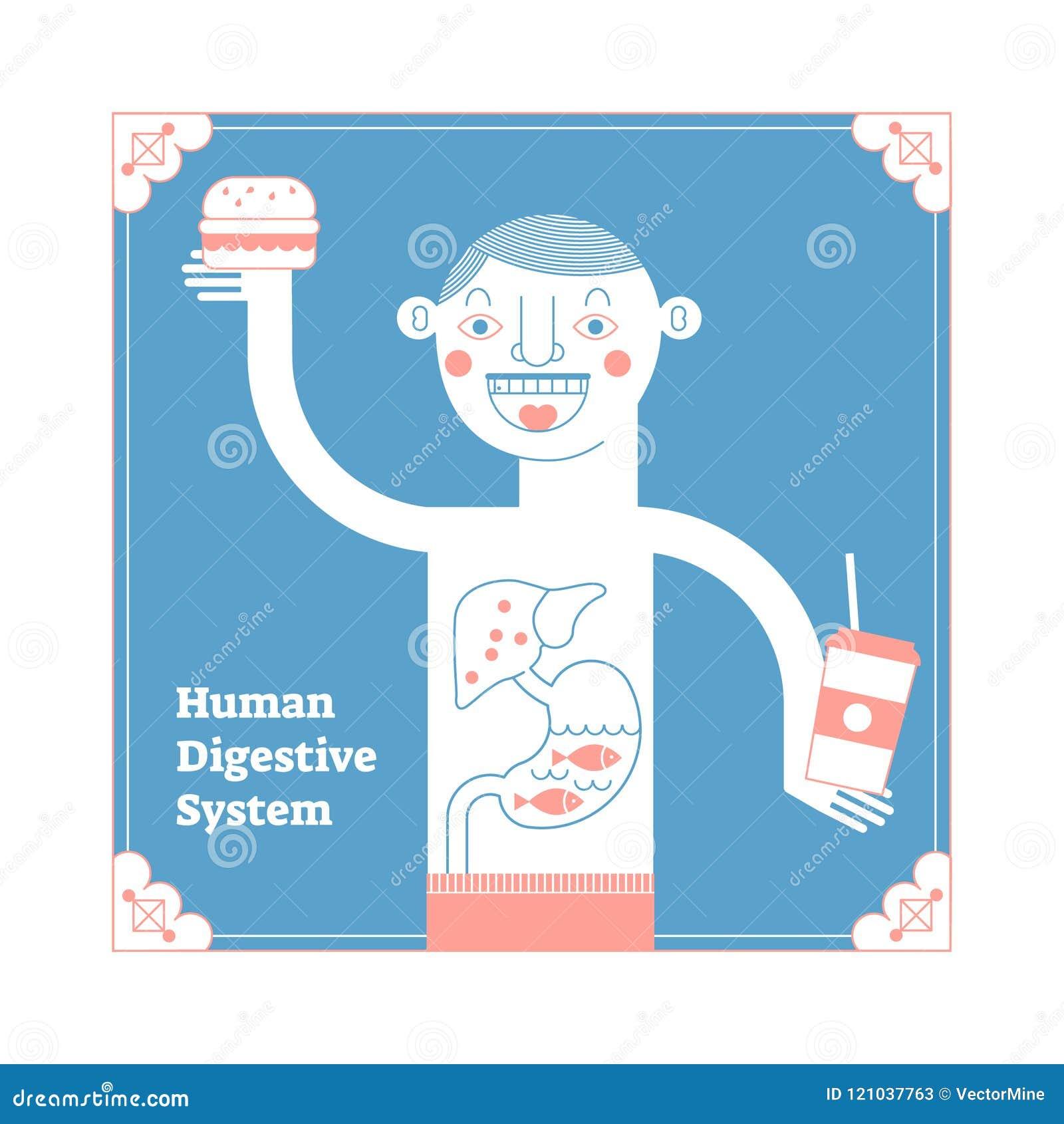 Stylizowany Ludzki Trawienny system, anatomiczna wektorowa ilustracja, obszar, konceptualny dekoracyjny stylowy sztuka plakata, k