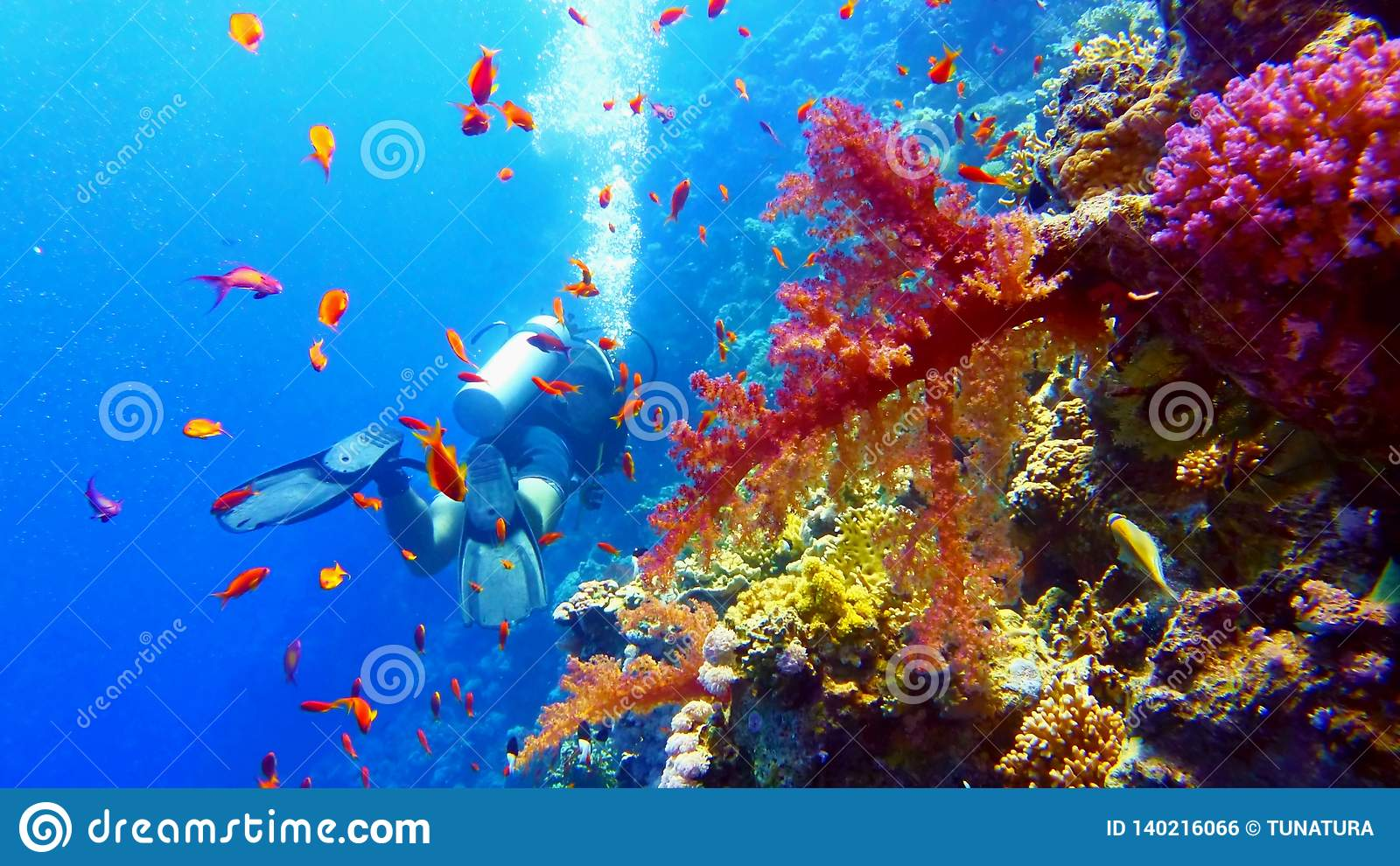 Subaqueo vicino alla bella barriera corallina