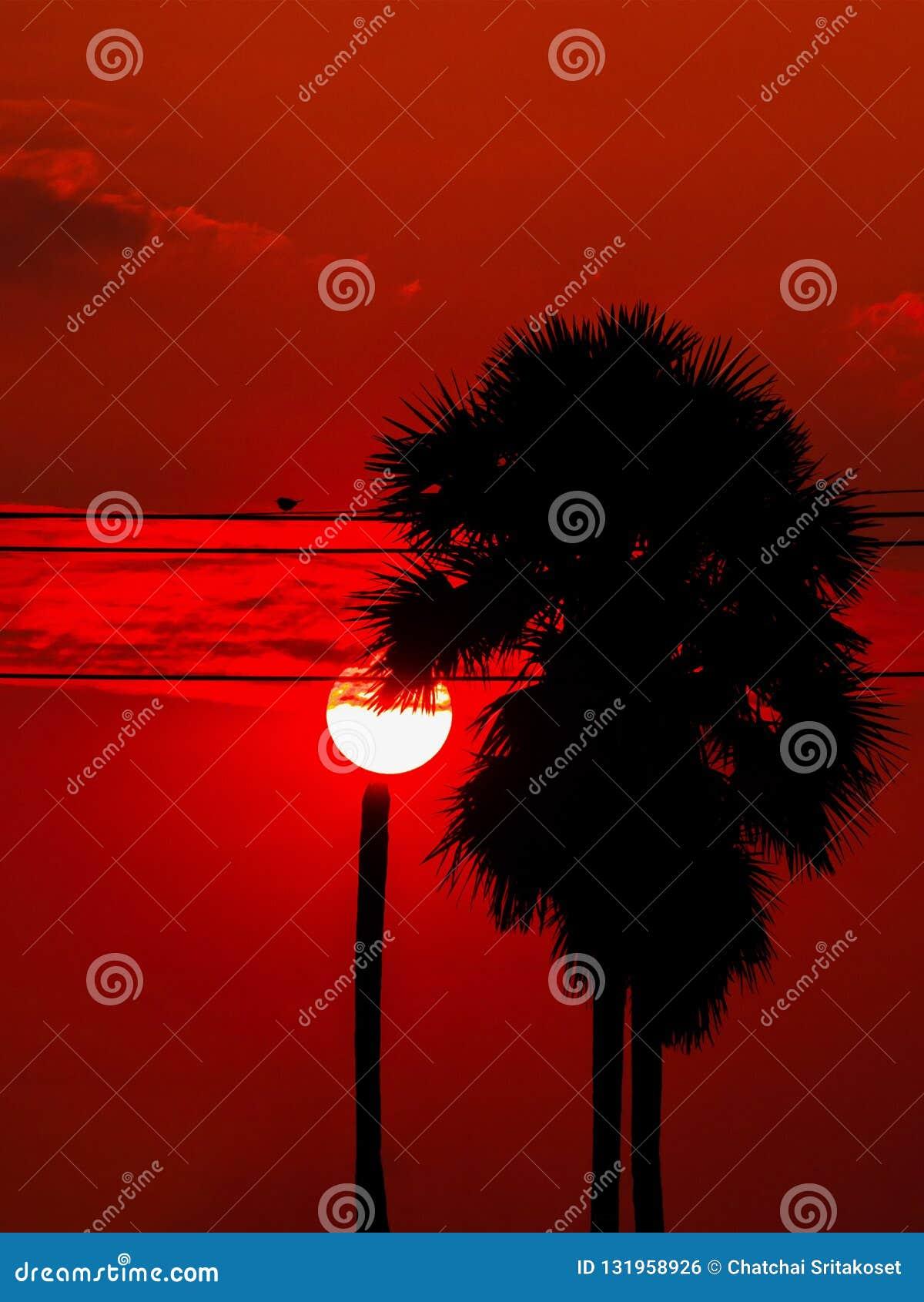 Subida de Sun con la palmera y el pájaro del azúcar de la silueta en los wi eléctricos