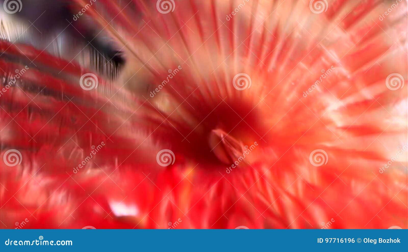 gusano rojo brillante