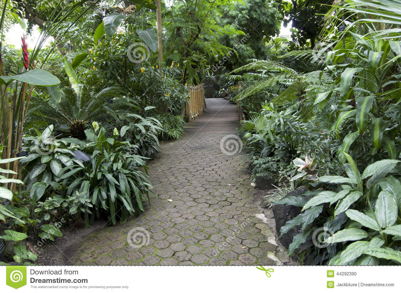 Subtropical garden plants stock photo image of for Planting a garden