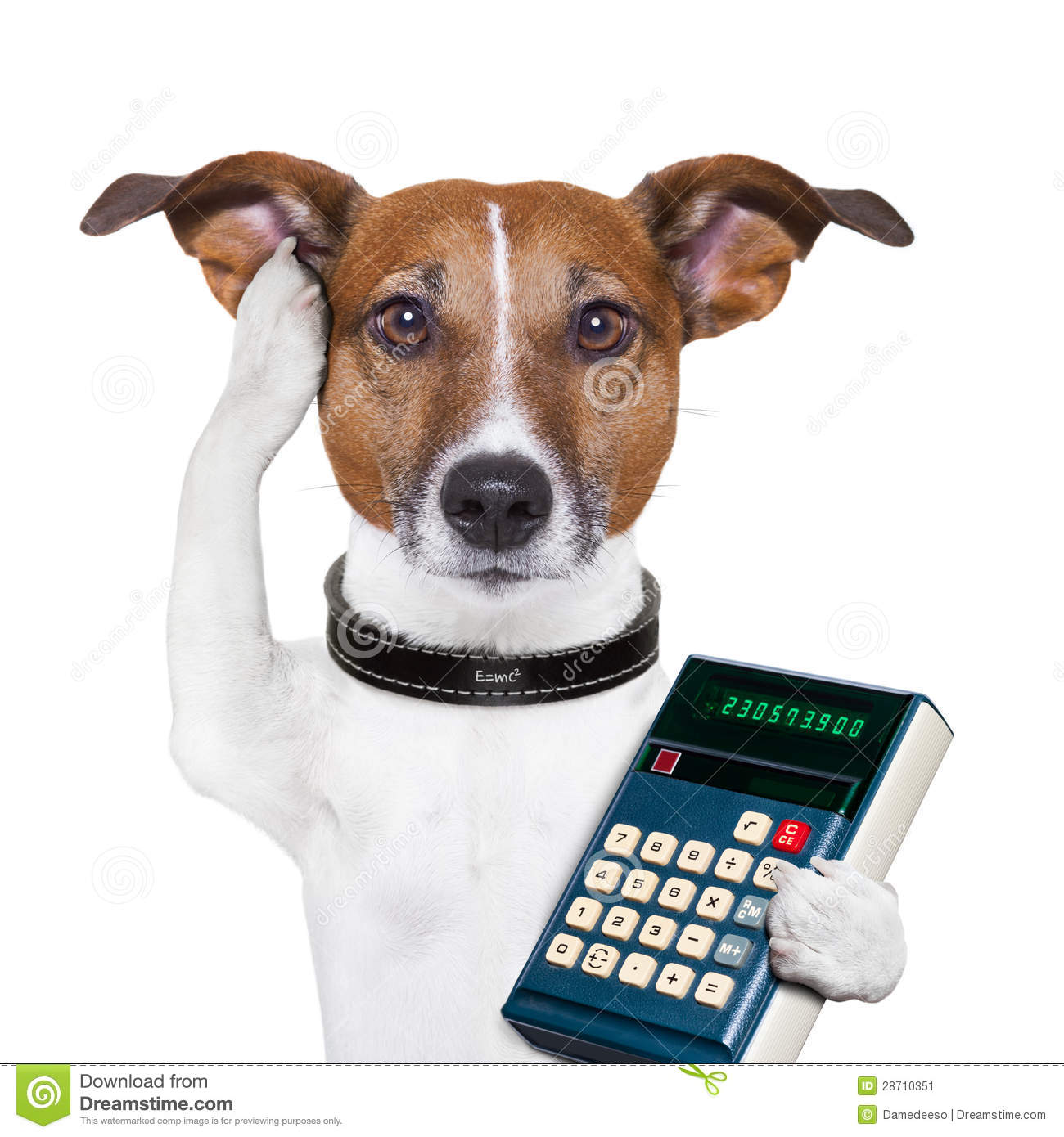 More similar stock images of ` Successful dog accountant `