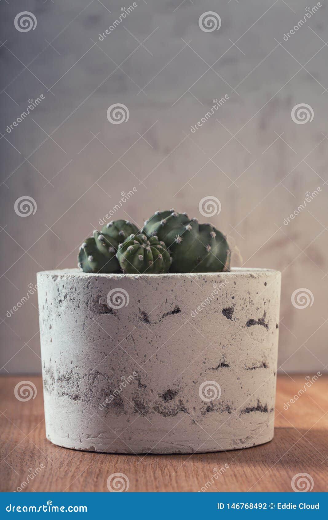 Succulent στο χειροποίητο συγκεκριμένο δοχείο