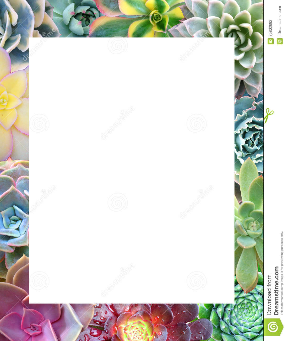 Photo Page: Succulent Border Stock Photo. Image Of Cuttings, Page