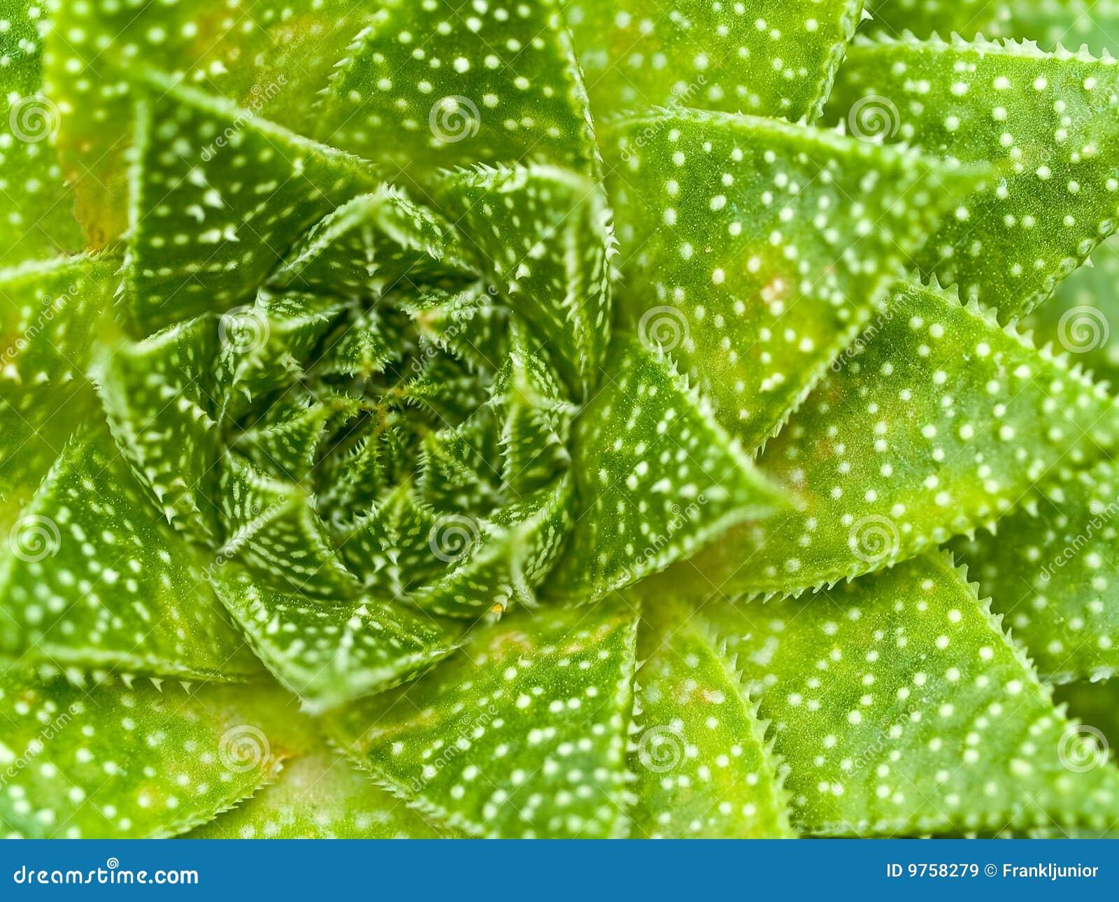 Succulent Cactus Macro Textures Scary