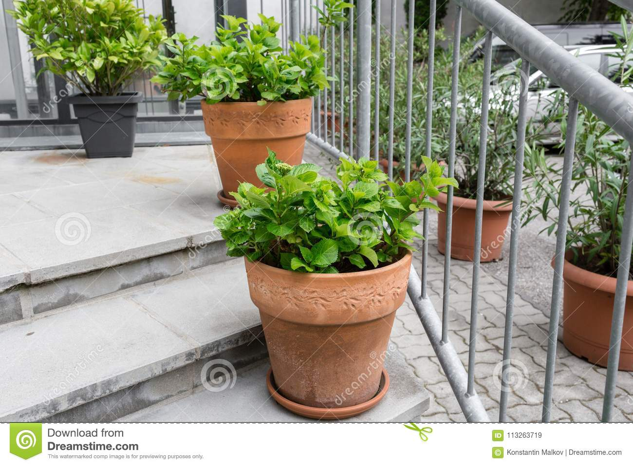 Green Plants In Pots Outdoor On The Summer Patio Small Townhouse Perennial Summer Garden Vienna Austria Stock Image Image Of Grass Floral 113263719