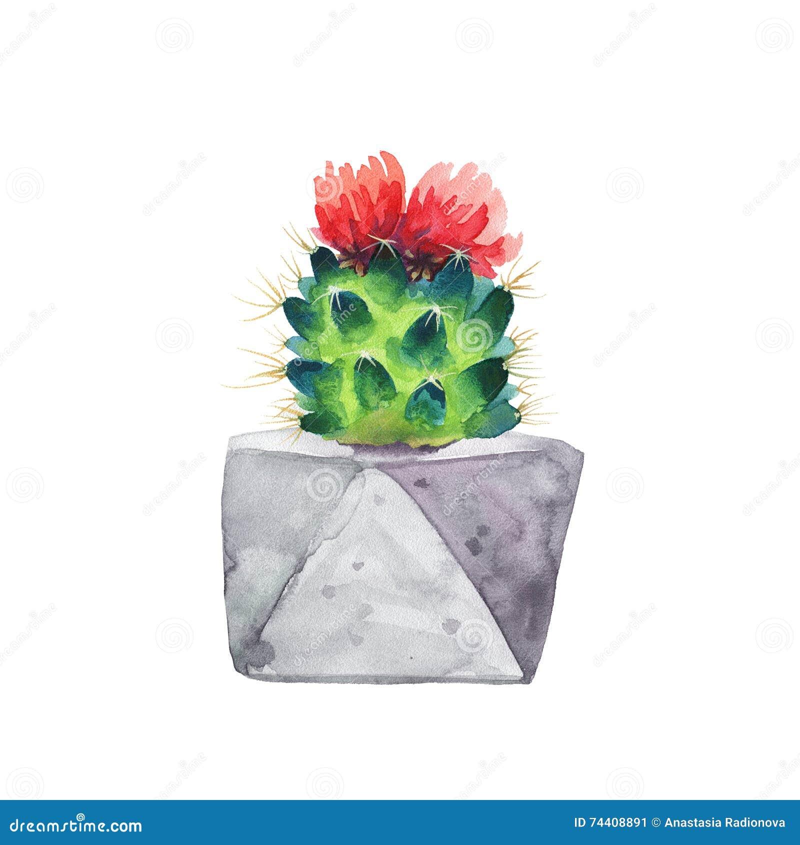 Succulent d 39 aquarelle dans un pot de fleurs blanc d for S occuper d un citronnier en pot