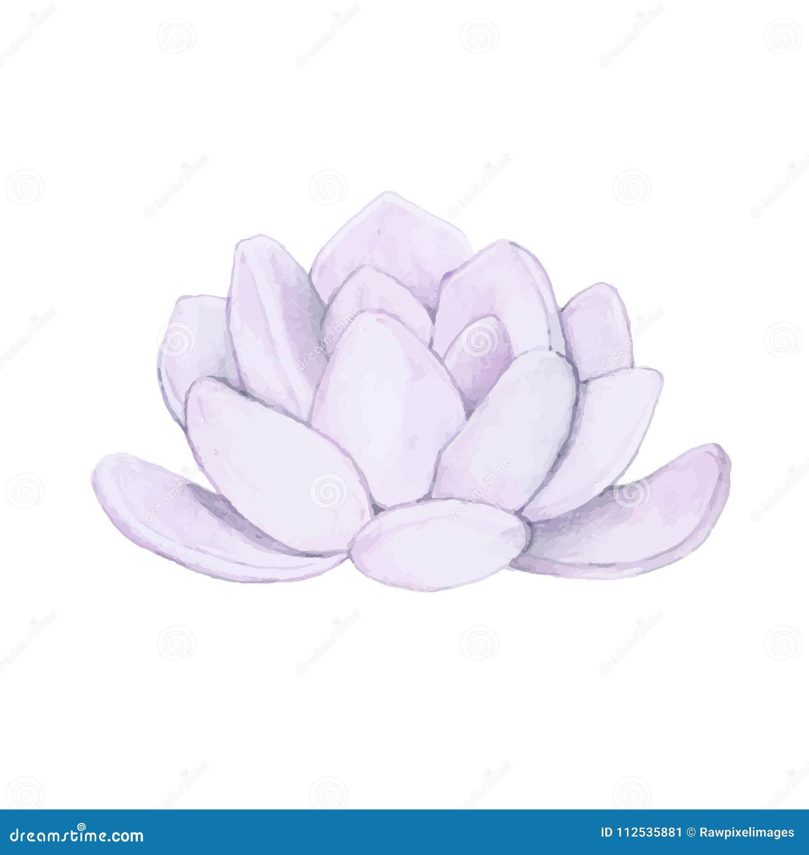 Succulent dibujado mano del laui del echeveria