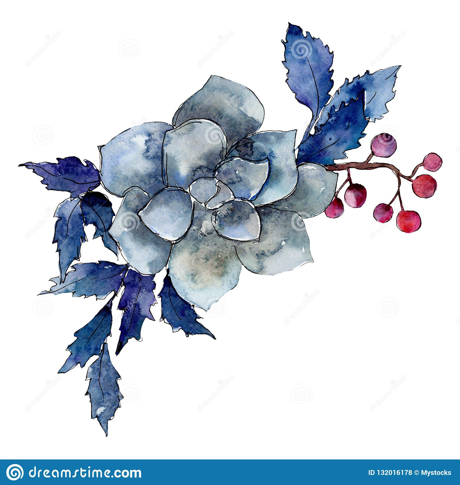 Succulent Flower With Blue Leaves Isolated Bouquet Illustration Element Watercolor Background Illustration Set Stock Illustration Illustration Of Leaf Blue 132016178