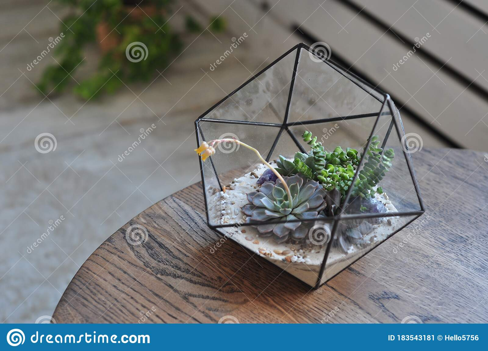 Succulent In Glass Terrarium On The Wooden Table Stock Image Image Of Botany Nature 183543181