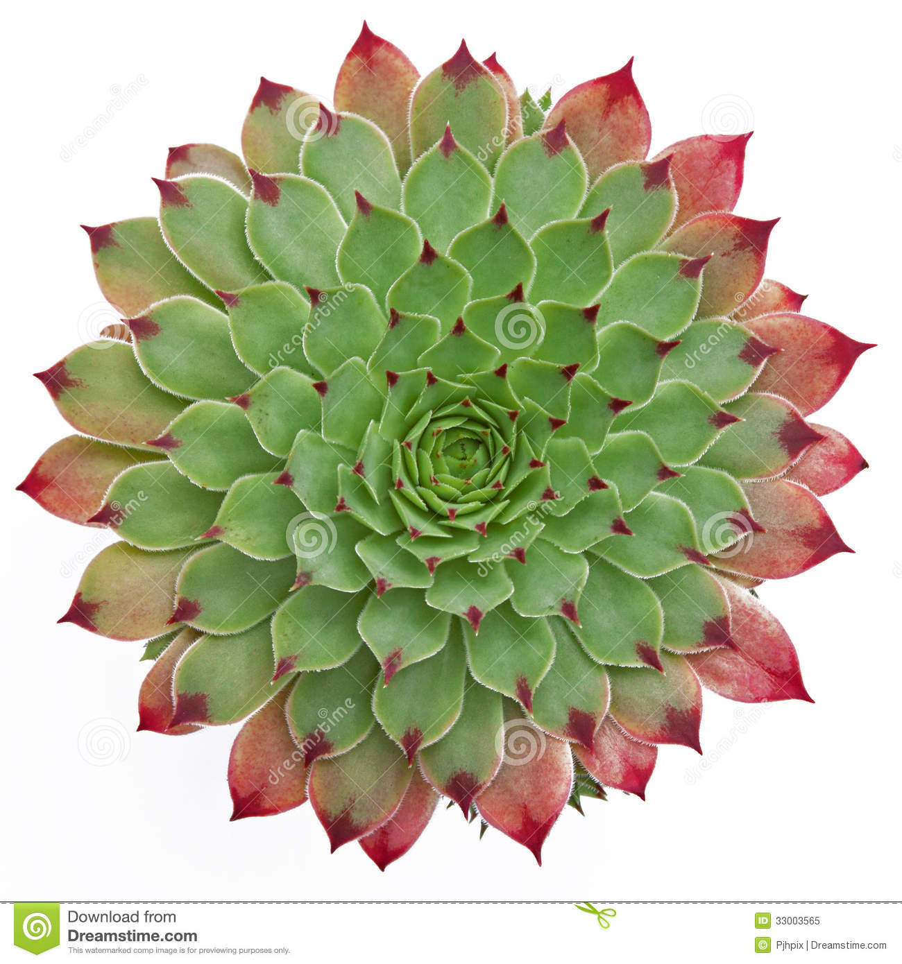 Succulent Pattern Royalty Free Stock Photo - Image: 33003565