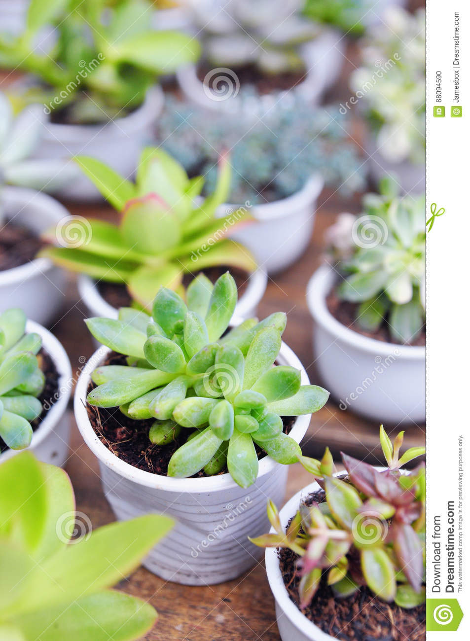 A succulent plant in asia