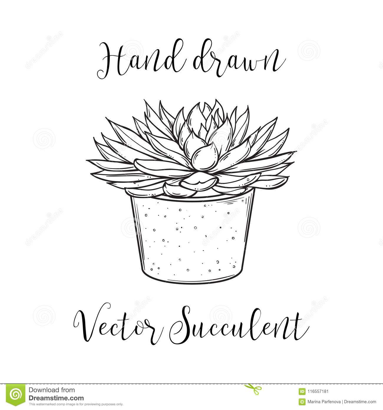 Succulent plant in a concrete flower pot hand drawn black and white download succulent plant in a concrete flower pot hand drawn black and white vector illustration mightylinksfo