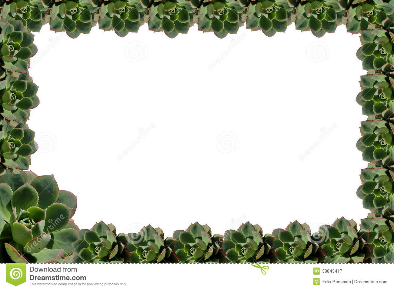 Cool Frame Plant Frame Pictures To Pin On Pinterest Pinsdaddy