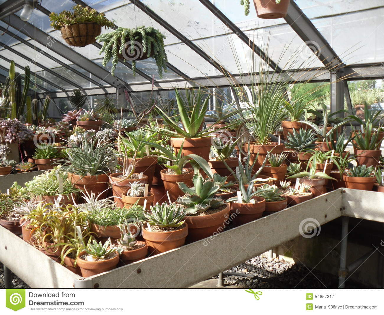 Succulent Plants In New York Botanical Garden. Stock Image - Image ...