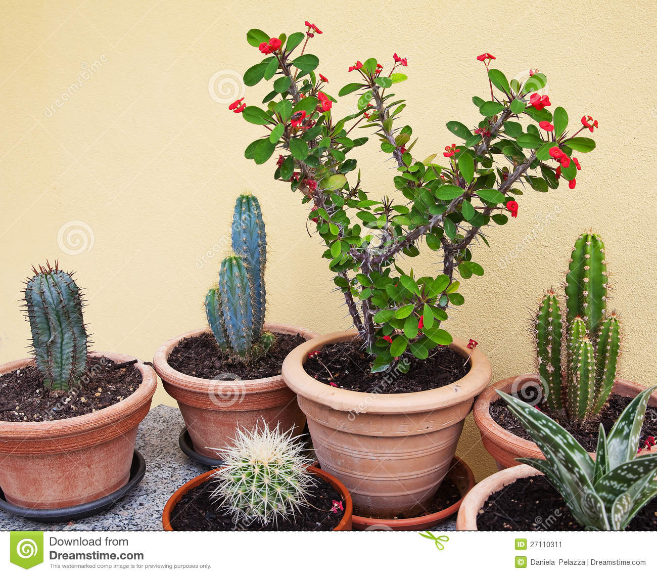 Succulent Plants In Pot Stock Image Image Of Ornament 27110311