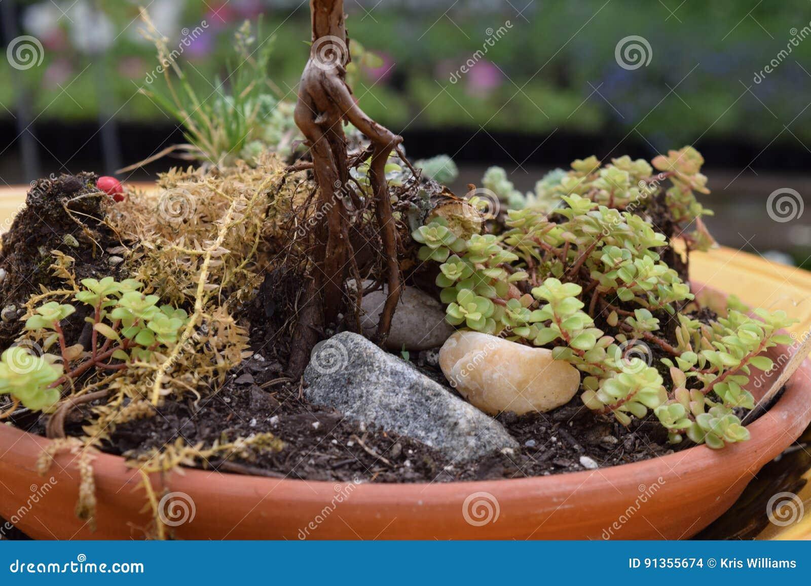 Succulent rock planter bowl