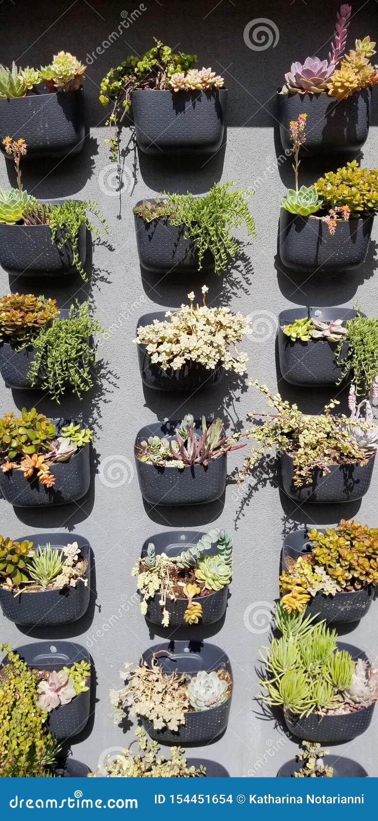 Succulent Wall Garden In Southern California Outdoor Shopping Center Stock Photo Image Of Table Center 154451654