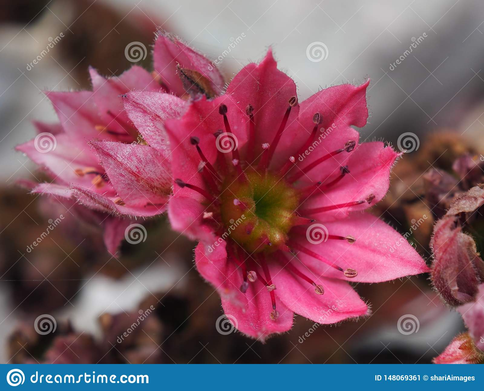 Succulente bloemkip en Kuikens