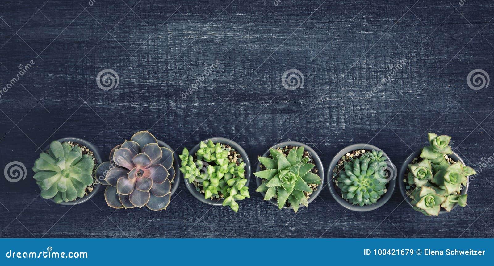 Succulenti differenti