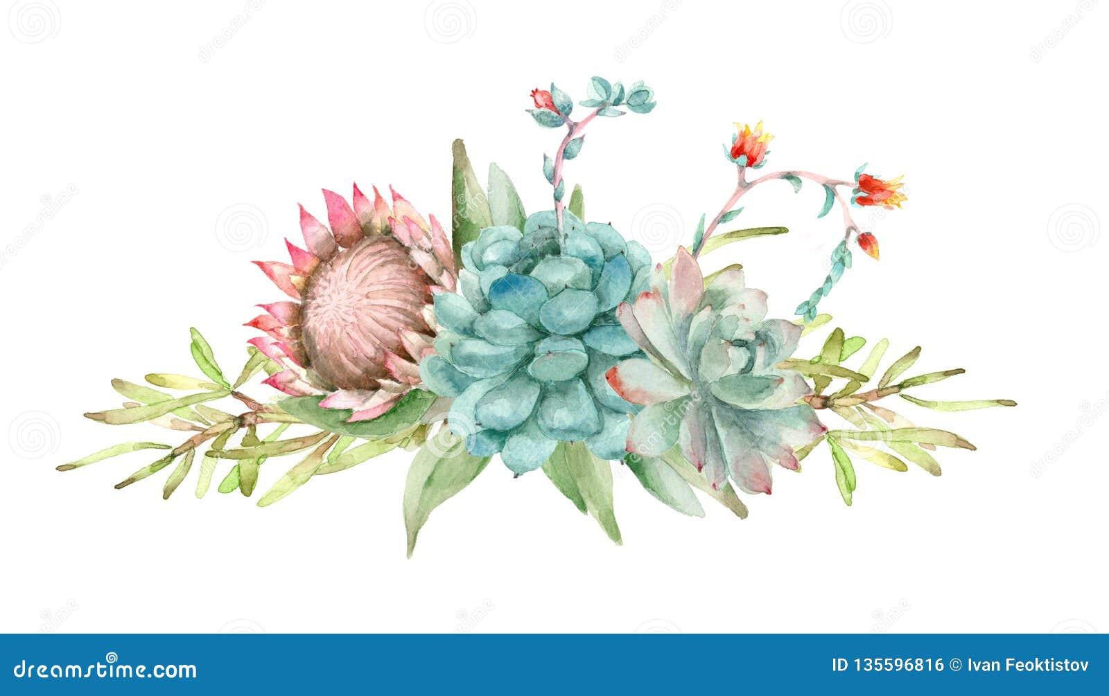 Succulents Bouquet Watercolor Stock Illustration Illustration Of Composition Cactus 135596816
