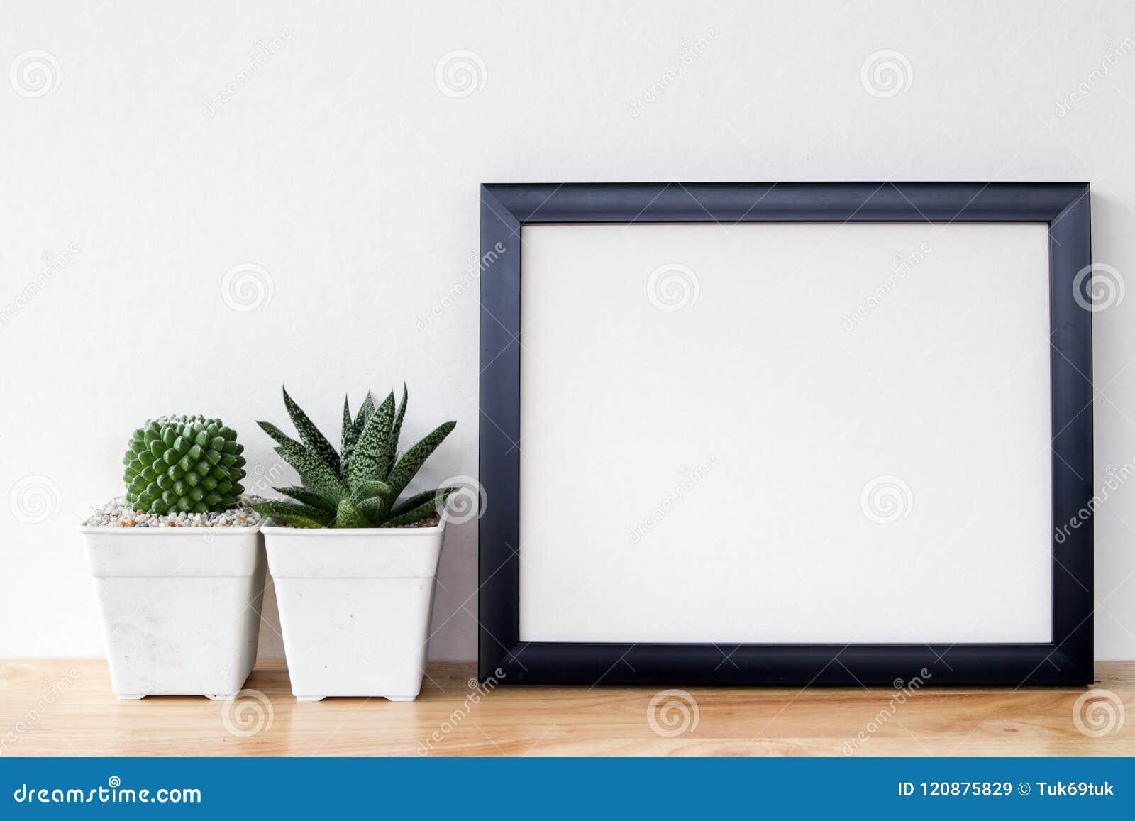 Succulents o cactus en potes concretos sobre el fondo blanco en el estante y la mofa encima de la foto del marco