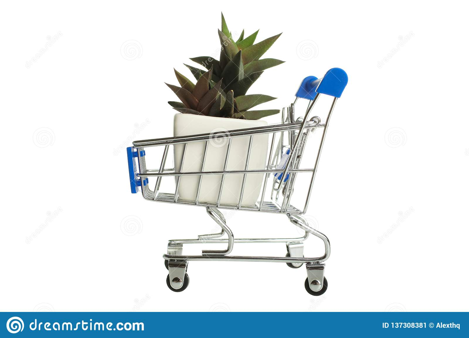 Succulents in supermarket trolly
