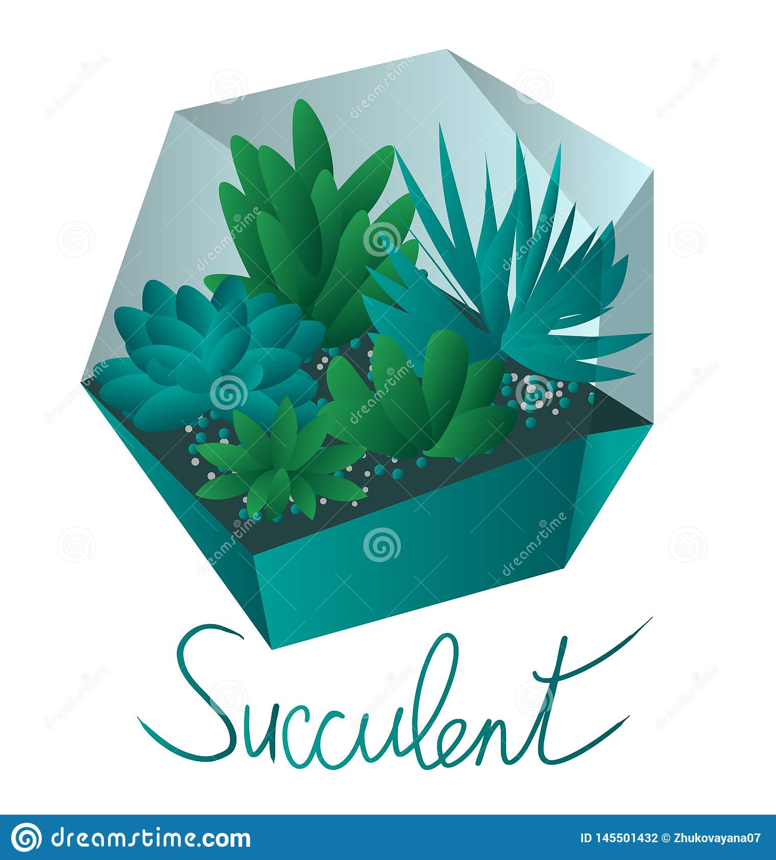 Succulents In A Terrarium succulents in pots, isolated on white background
