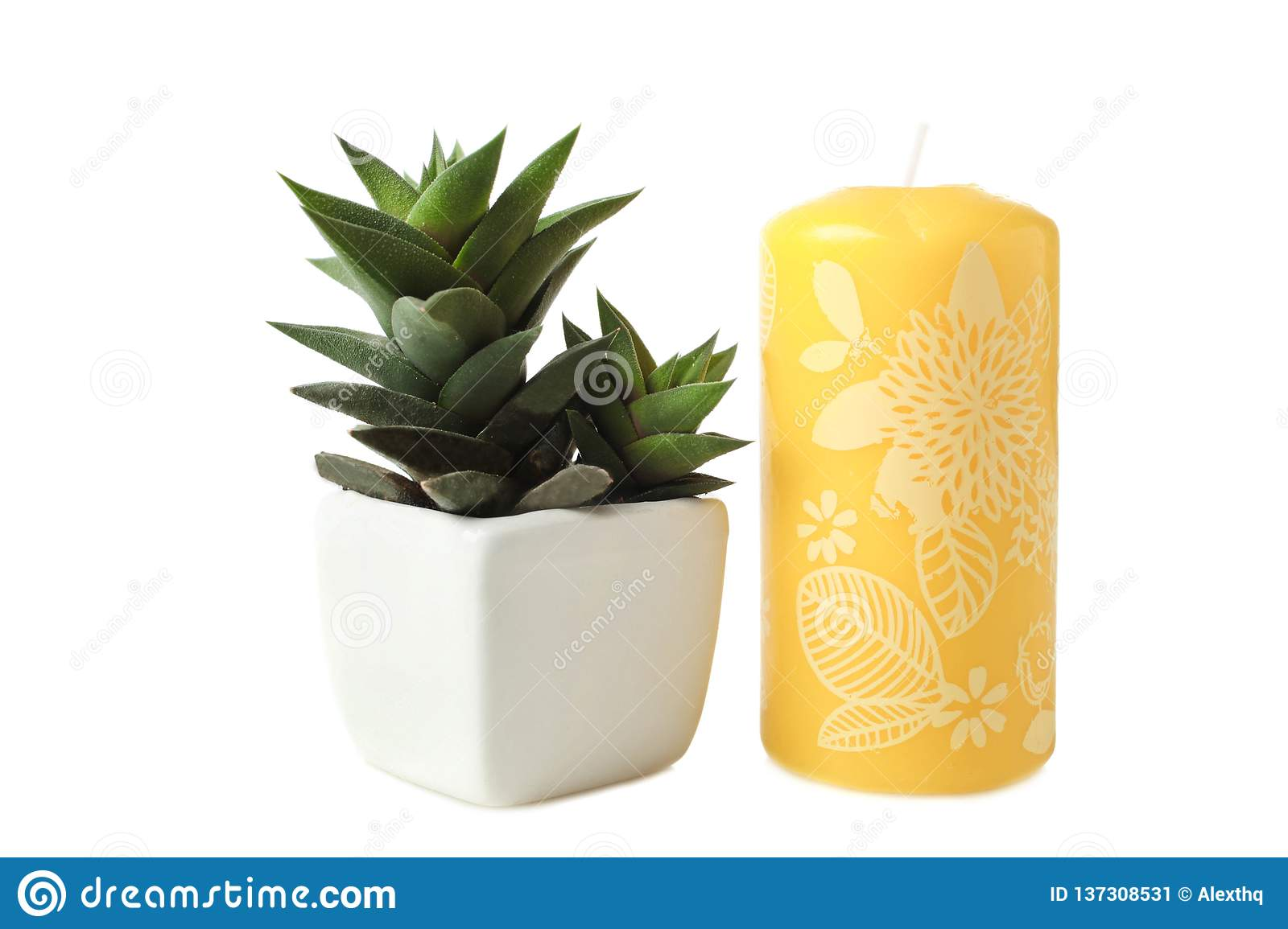 Succulents in white flowerpot and candle