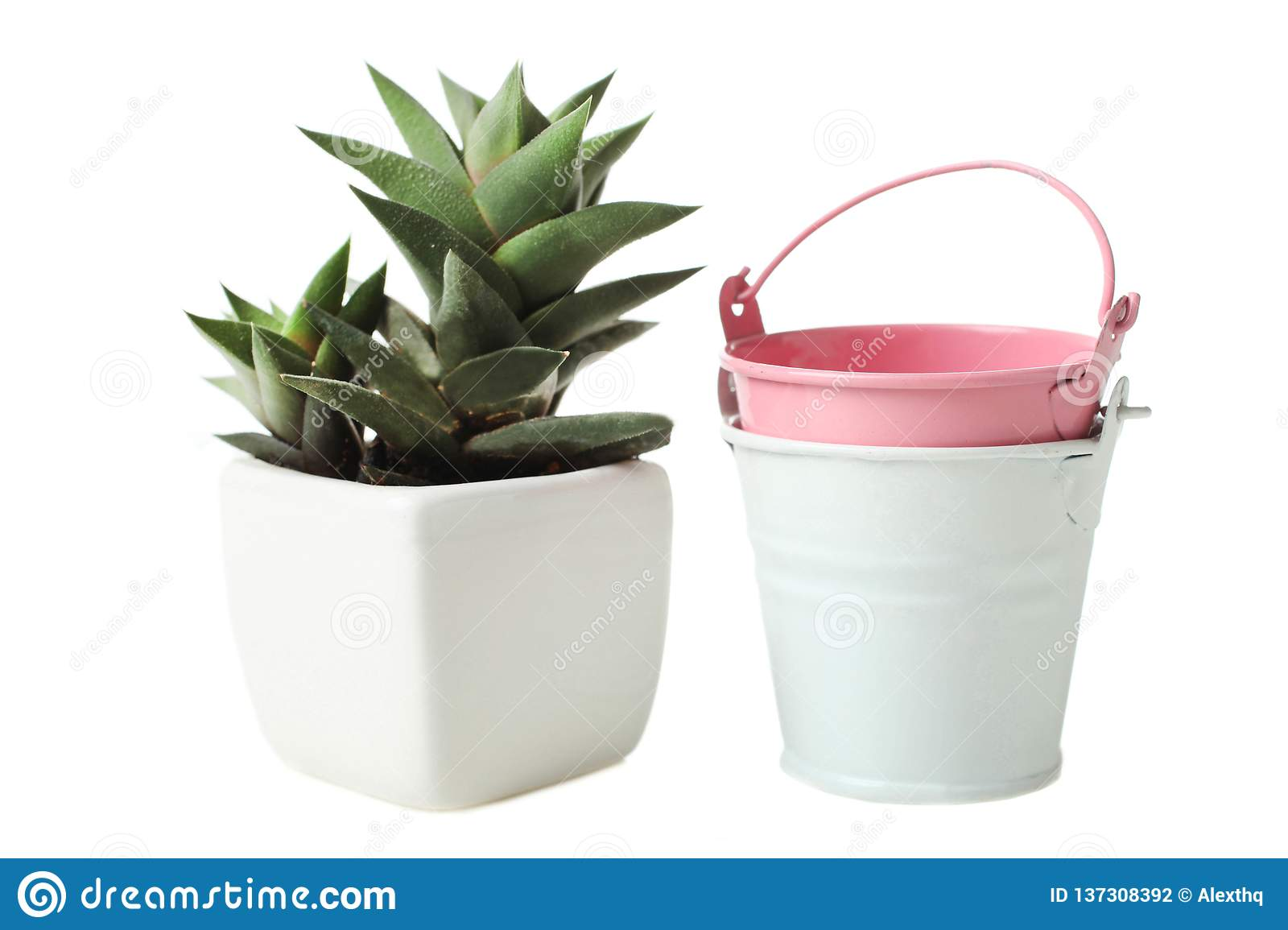 Succulents in white flowerpot and two small buckets
