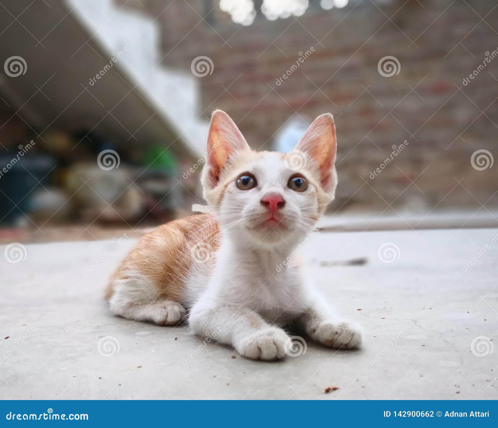 Suchende Katze etwas für essen