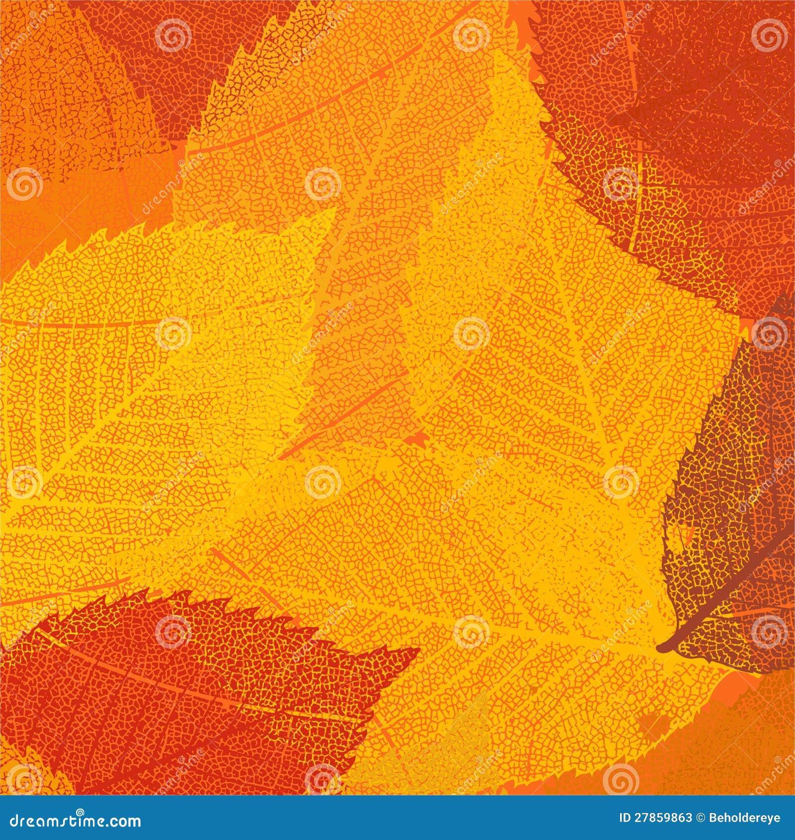 Suchy jesień liść szablon. EPS 8
