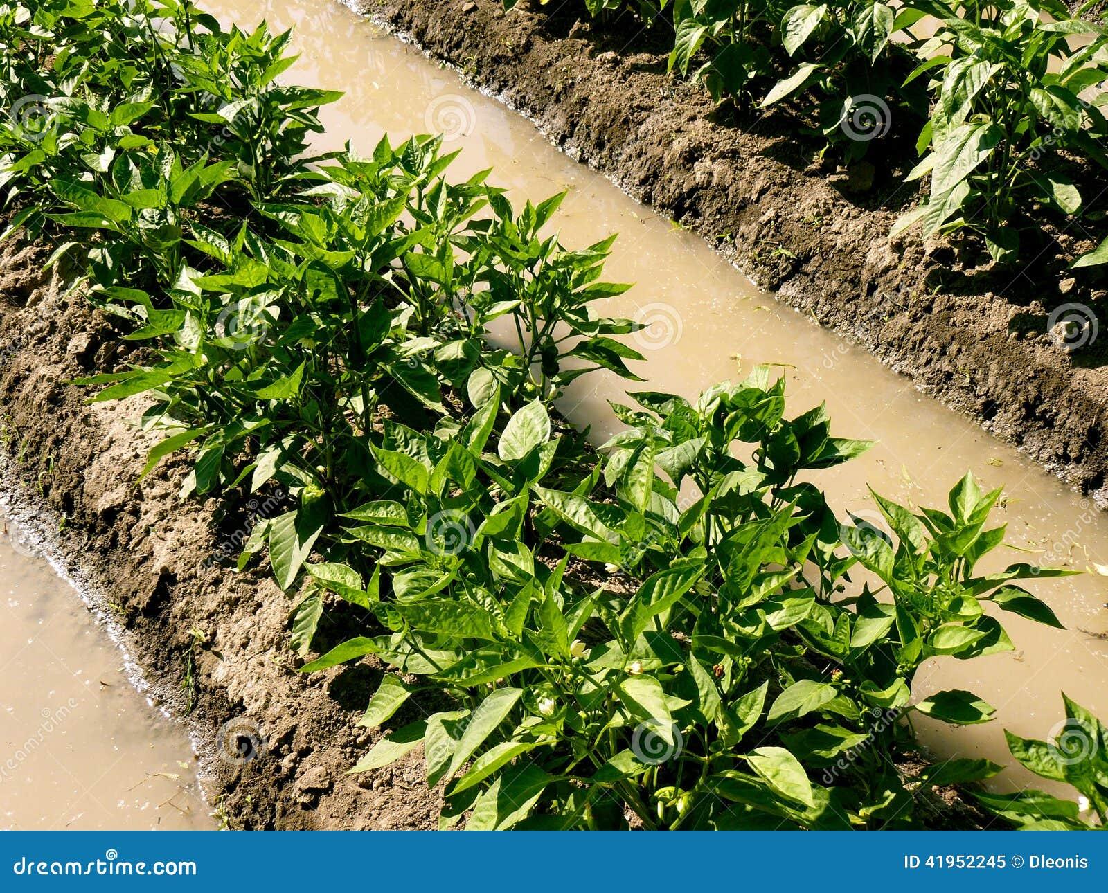 Suchy strefy ogrodnictwo
