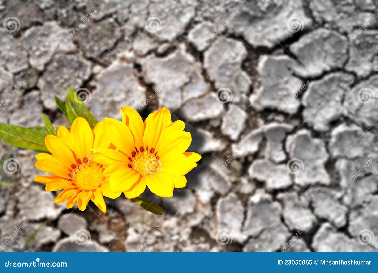 Suchych pojęcia kwiatów gruntowa uporczywość
