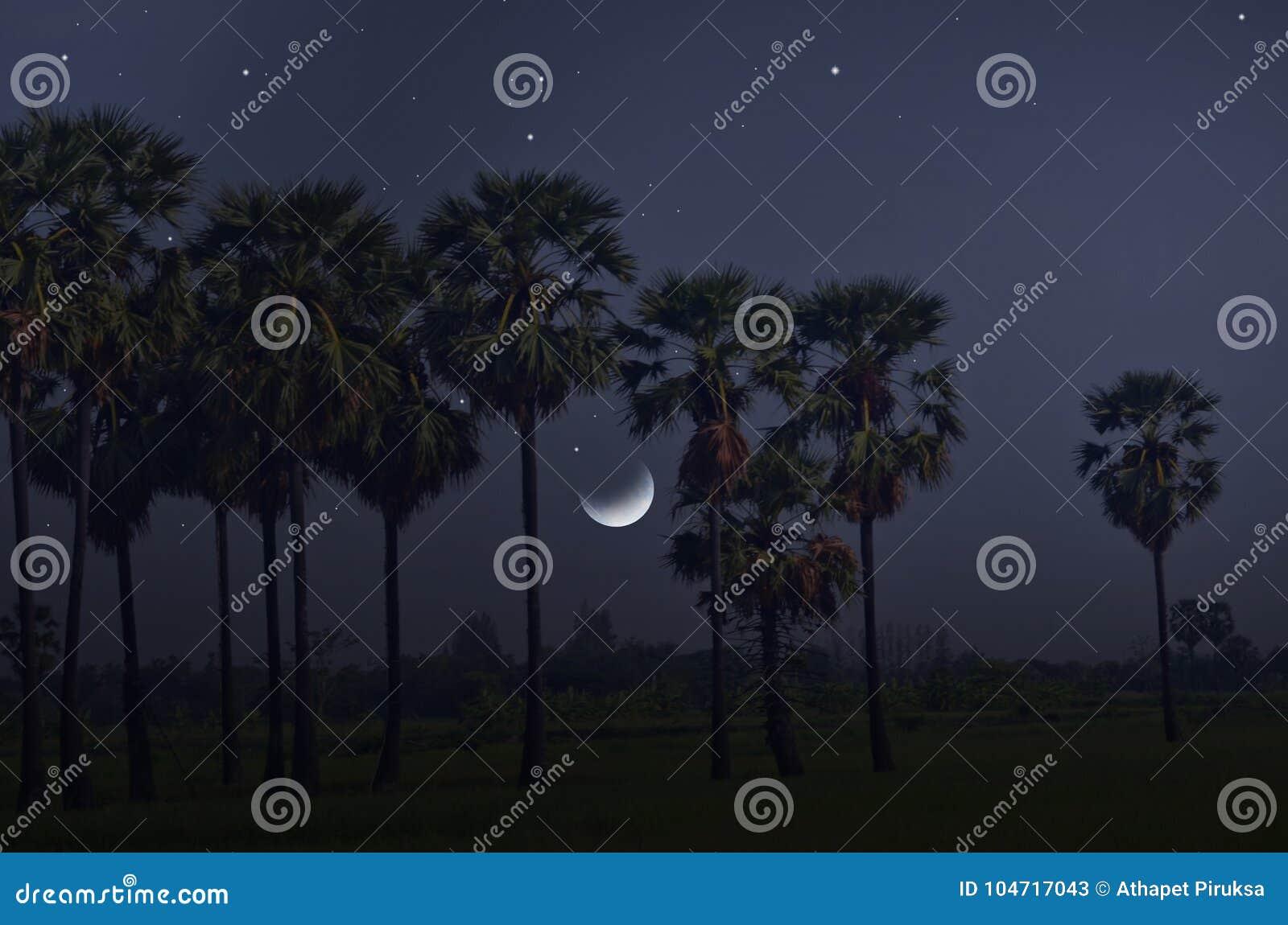 Sucrez les palmiers et les étoiles lumineuses dans la nuit en croissant