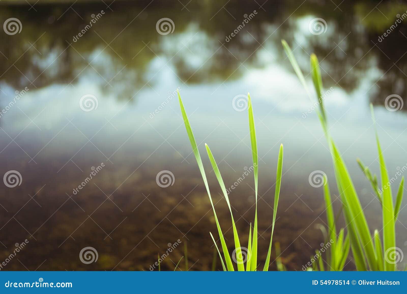 Suddig gräsplan och sjö Maj