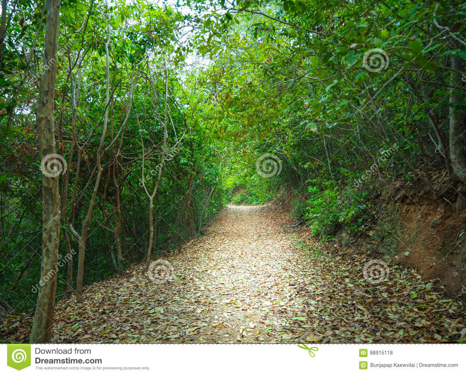Suddighetsskog som går slingor
