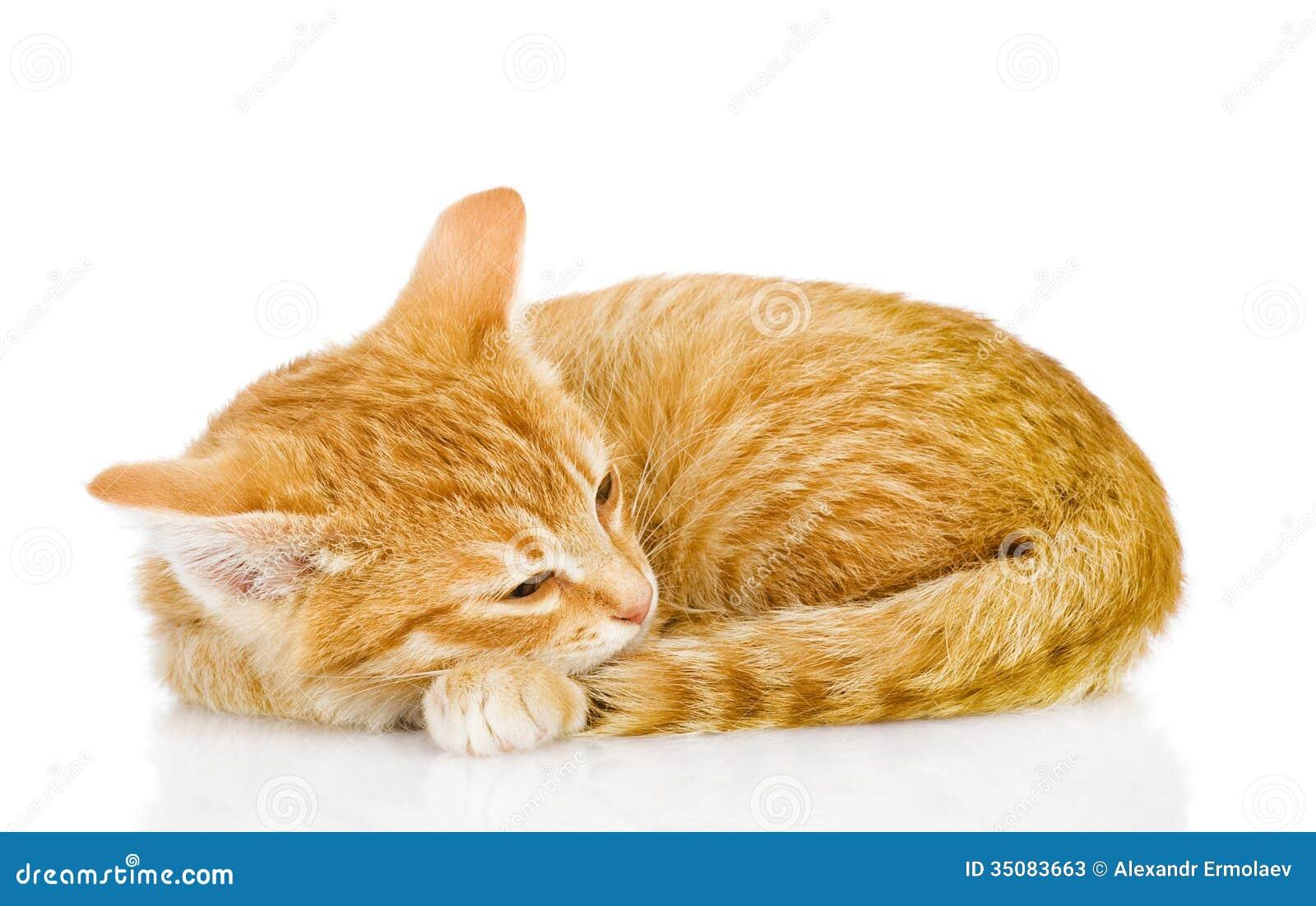 Sueño bonito del gato.